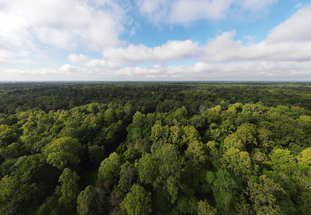 Aerial view of hardwood forests and cloudy blue sky